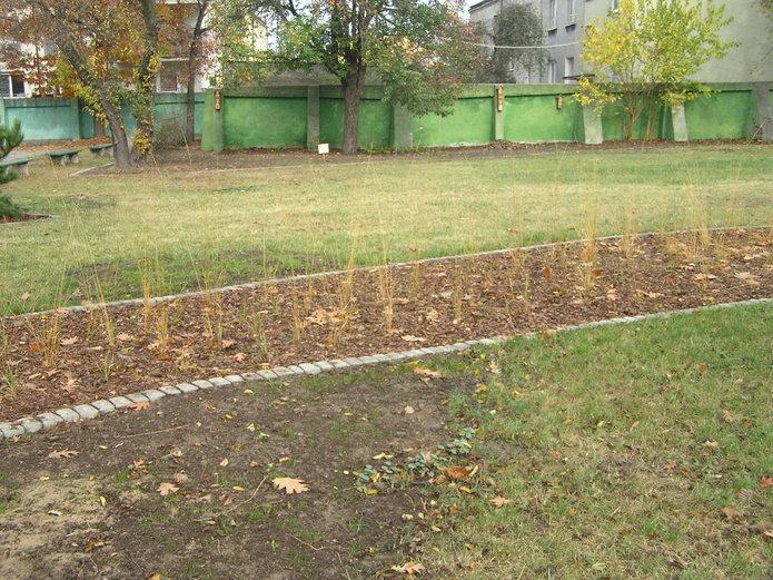 W szkole na Grochowie powstał ogród przyjazny dzikim zwierzętom