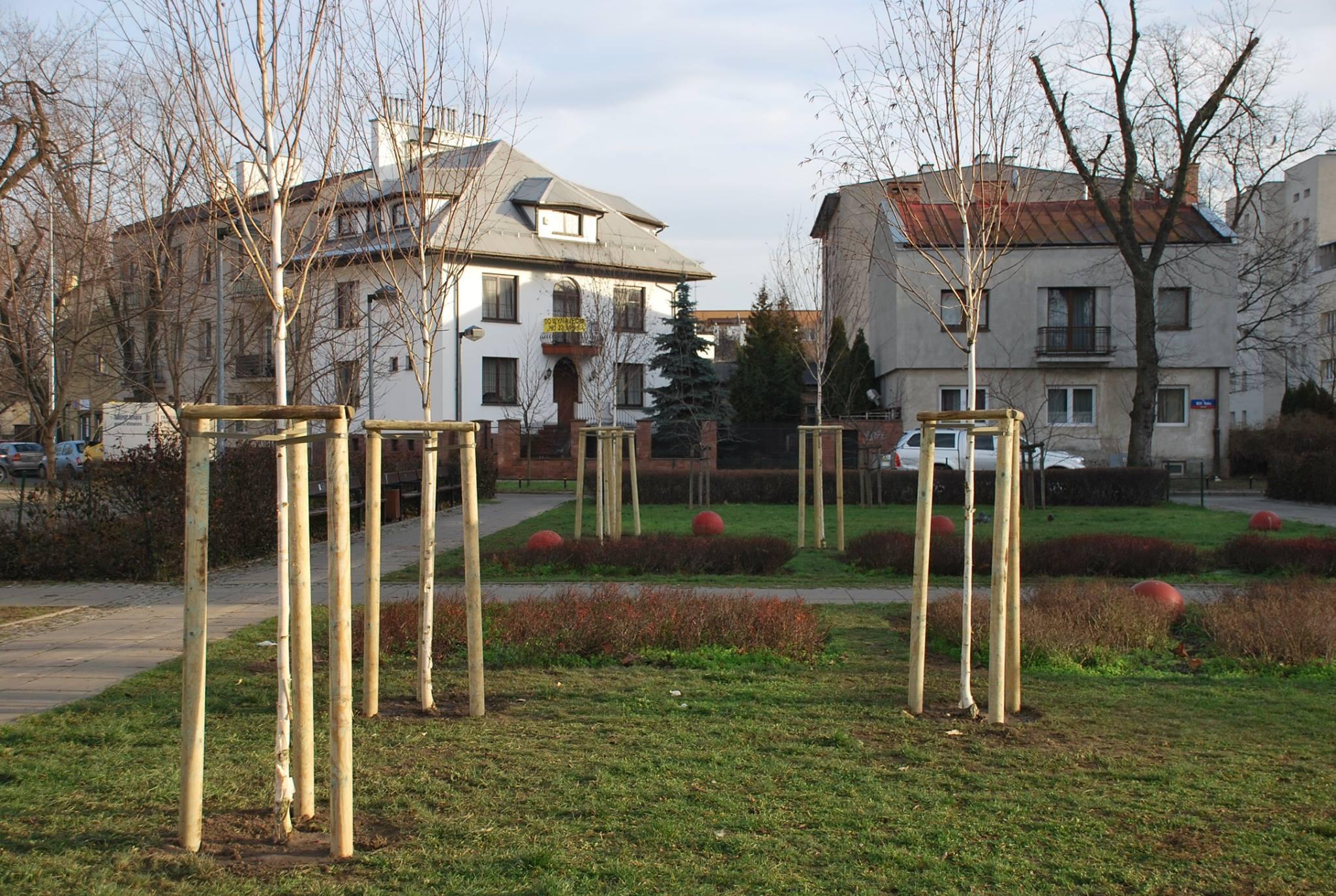 Na terenie parków i skwerów przybyło drzew