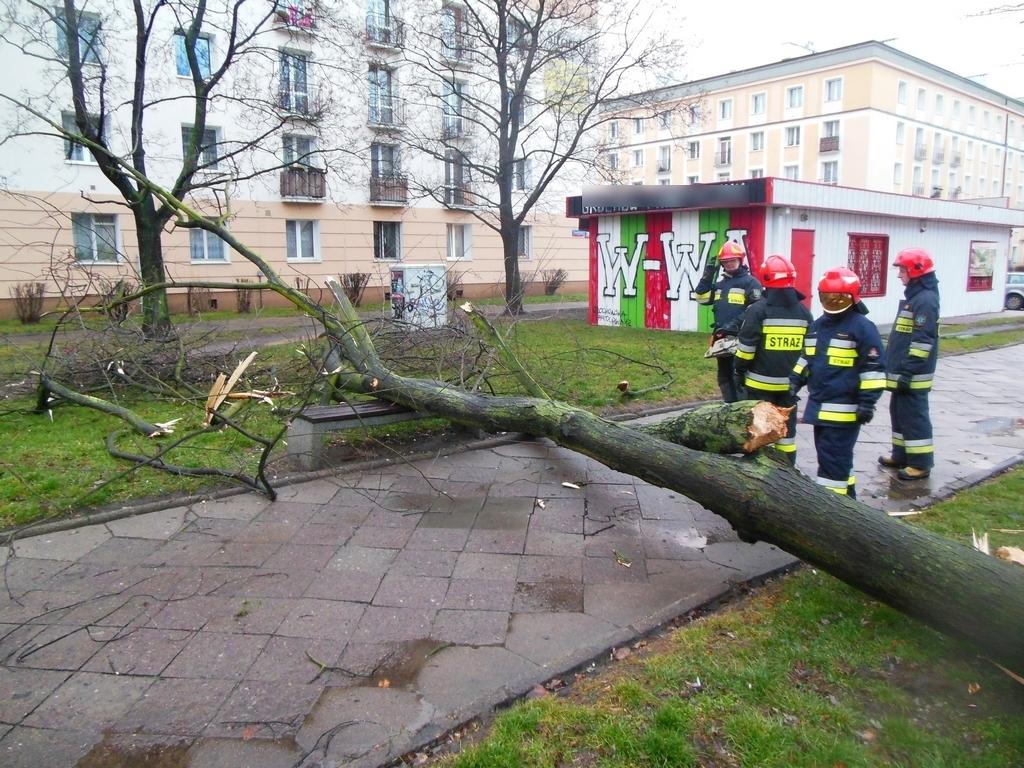 Wiatr powalił drzewa na Białowieskiej i Dwernickiego