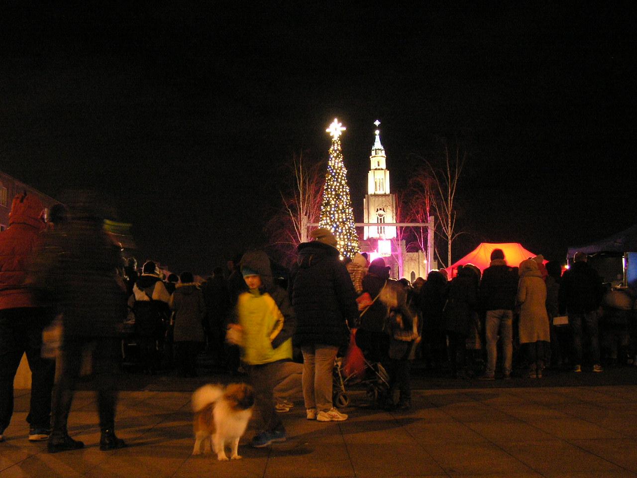 Choinka na Placu Szemeka rozbłysła po raz czwarty