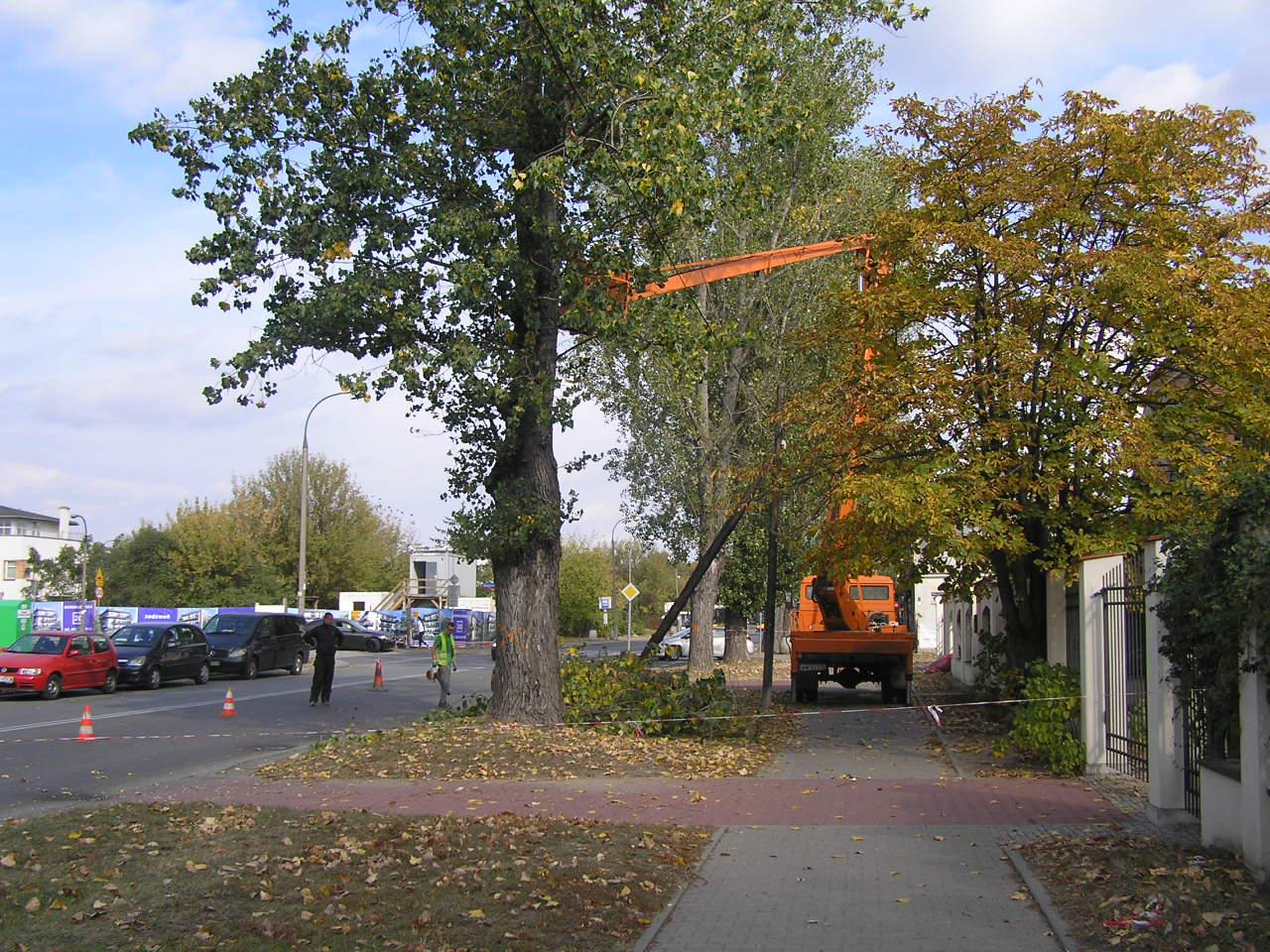 14 drzew na Chłopickiego do wycinki. Zagrażały bezpieczeństwu