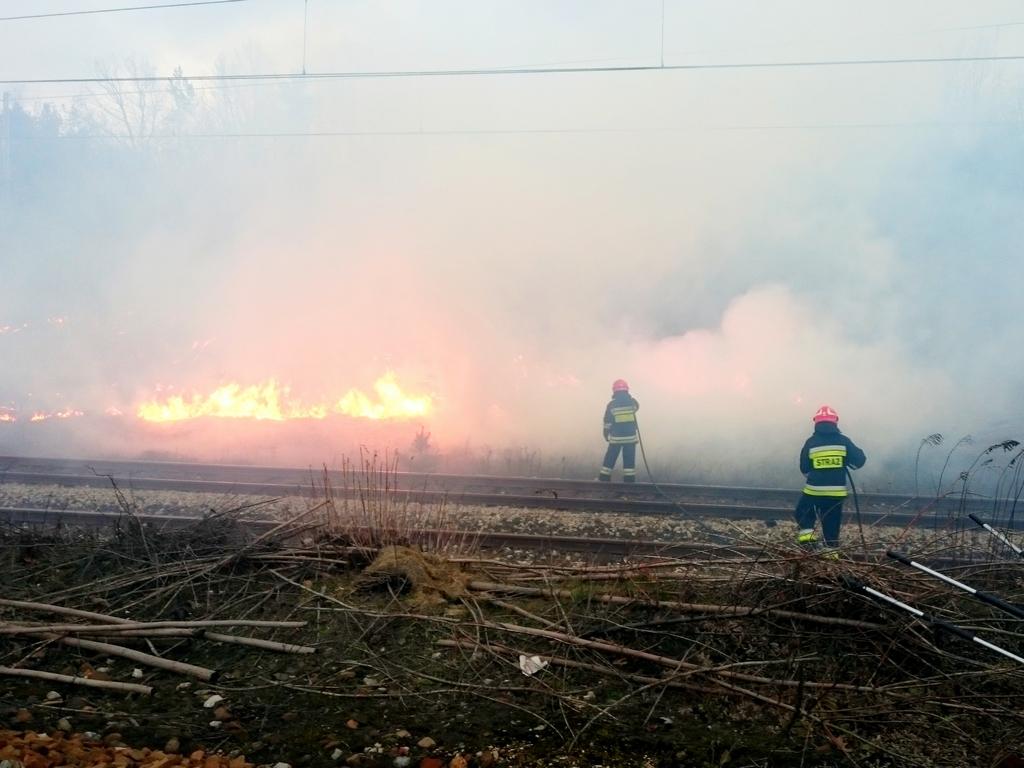 Pożar traw przy ulicy Makowskiej