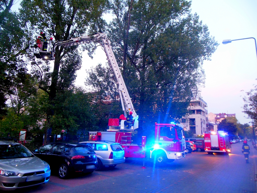 Strażacy wycięli spróchniałe drzewo na Paca