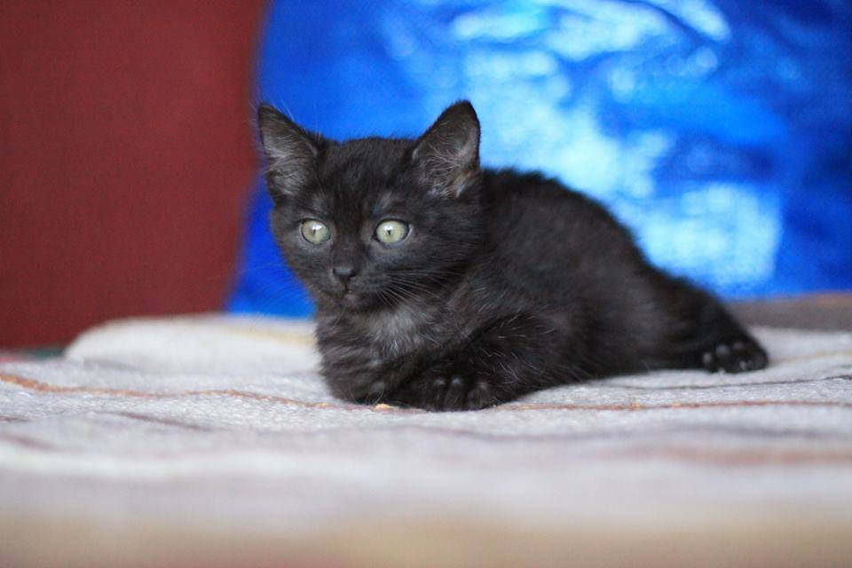 Koty z Grochowa czekają na karmę - możesz pomóc!